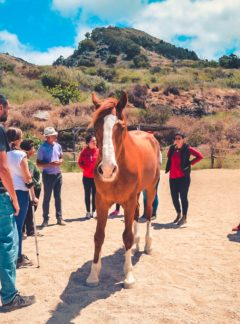 Activities Horse Workshop