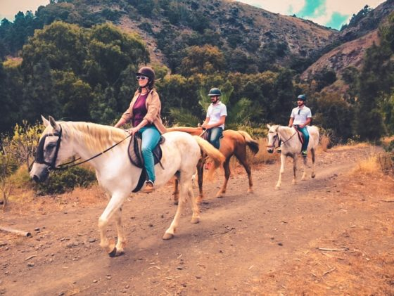 Activities Horse Excursions